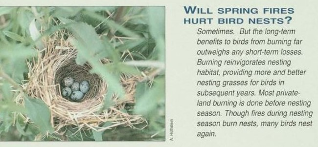 Hurt Bird Nest Information