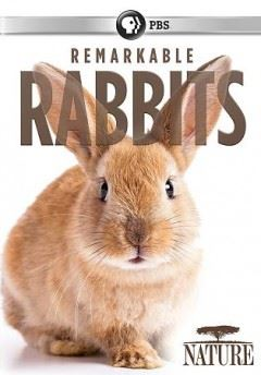 Remarkable Rabbits Opens in new window